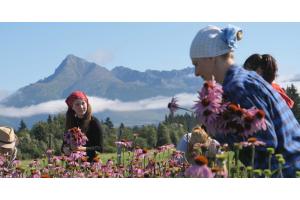 Hanus - príbeh úspešnej firmy. Sypané čaje a bylinné prípravky vyrábajú vo farmaceutickej kvalite už desiatky rokov.
