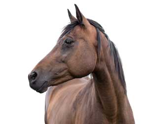 Kozmetika pre kone