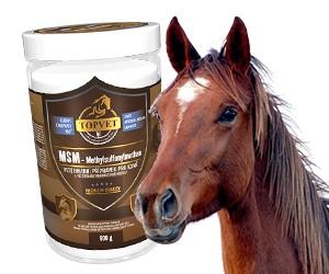 Výživové doplnky pre kone