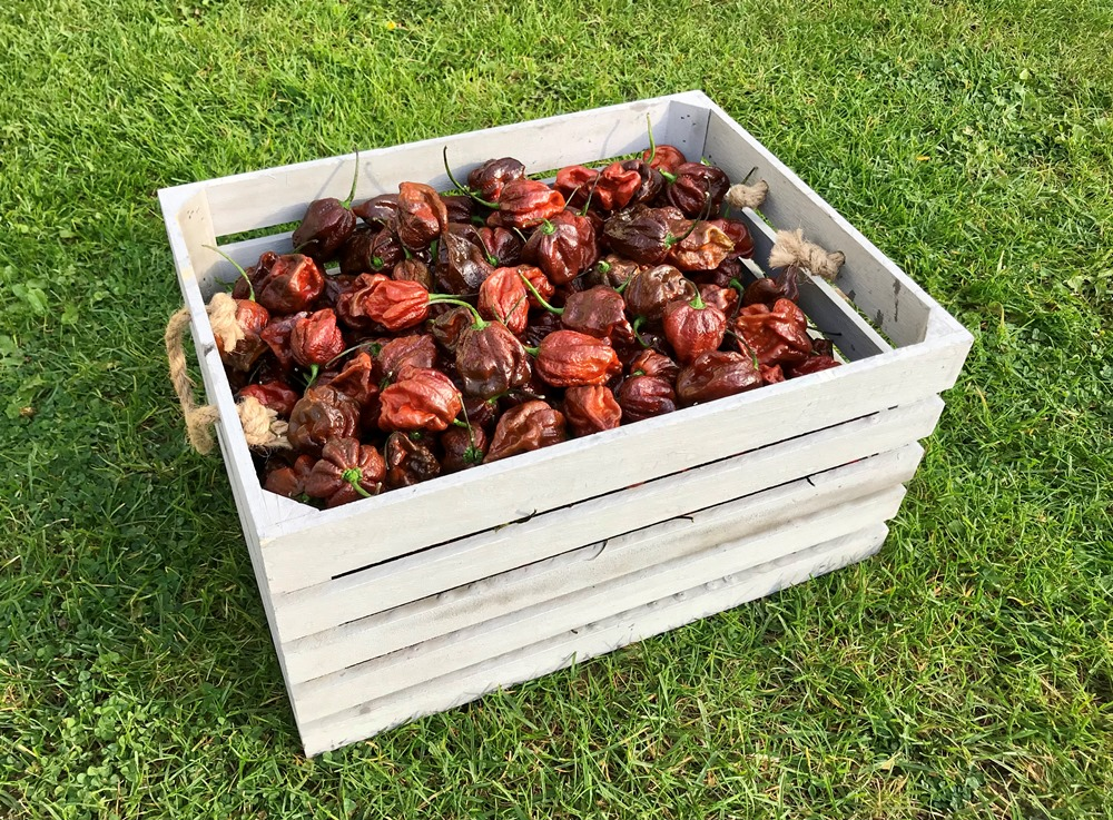 Trinidad skorpion moruga chocolate - tekuté chilli 30ml