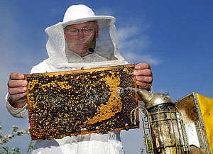 Kde a aký med kupovať?